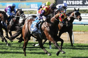 Under The Louvre is the Races.com.au tip to win Saturday's Bel Esprit Stakes at Caulfield. Photo: Race Horse Photos Australia