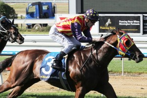 Under The Louvre is out pic to take out the 2015 Moonga Stakes. Photo: Adrienne Bicknell
