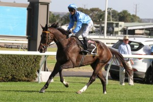 Celtic Prince has been the best backed roughie in 2016 Adelaide Cup betting market. Photo by: Jenny Barnes