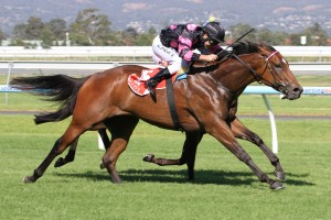 Every Faith is outright second favourite for success in 2014 SA Fillies Classic betting markets