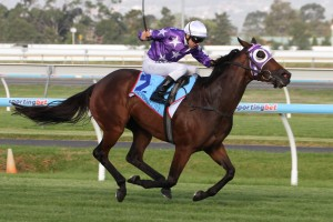 Driefontein headlines the field for the Magic Millions Cup on Saturday.