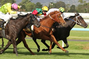 May's Dream wins the 2014 Australasian Oaks