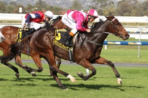 Delicacy remains clear favourite in 2015 CB Cox Stakes betting markets. Photo: Jenny Barnes