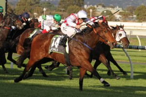 Shoals, above, will clash again with her stablemate Santa Ana Lane in The Everest at Randwick. Photo by Jenny Barnes.