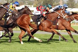 Egg Tart, above in red and green colours, is resuminh in the Theo Marks  Stakes. Photo by Jenny Barnes.