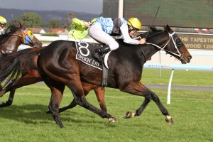 Smokin' Joey has completed a strong piece of work in the lead-up to the 2014 Stradbroke Handicap