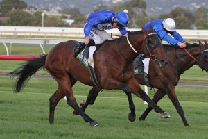 Howard Be Thy Name is the Races.com.au tip to win Saturday's Group 3 Grand Prix Stakes at Doomben. Photo: Jenny Barnes