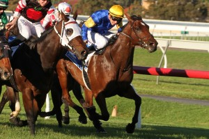 Santa Ana Lane, above in blue and gold colours, is one of the main chances in the 2018 Stradbroke Handicap at Doomben. Photo by Jenny Barnes.