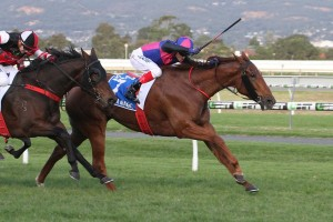 Vega Magic, above in blue and pink colours, wins The Goodwood at Morphettville. Photo by Jenny Barnes.