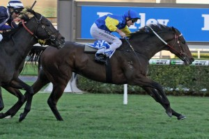 Black Heart Bart, above, was on the end of the interference caused by William Pike in the Kingston Town Classic at Ascot. Photo by Jenny Barnes.