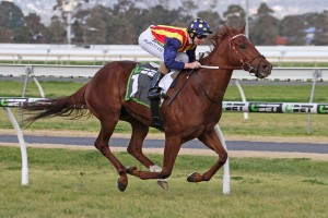 Nature Strip, above, will run in The Everest for slot holder the ATC at Randwick. Photo by Ultimate Racing Photos.