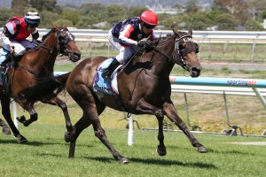 Too Cool To Fool is on track for a 2015 Adelaide Cup berth. Photo: Jenny Barnes