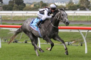Daytona Grey is primed for another big run in Saturday's Group 3 Bletchingly Stakes at Caulfield. Photo: Jenny Barnes
