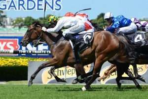 Fireworks will likely be a late entry for the 2015 Golden Slipper after winning the Widden Stakes on Saturday.