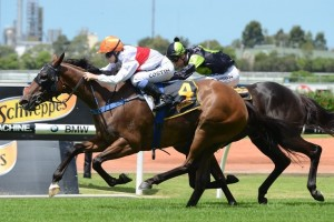 Mardi will look to continue her streak of three wins and three second placings from her six starts in the Millie Fox Stakes.