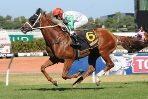 Junoob is clear favourite in betting markets for success in the 2014 Hollindale Stakes