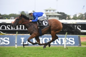 Alizee, above, heads up the nominations for the 2019 Winx Stakes at Randwick. Photo by Steve Hart.