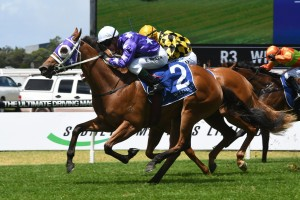 Fiesta, above in purple colours, is set to resume in the Silver Shadow Stakes at Randwick. Photo by Steve Hart.