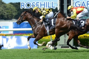 Scissor Kick is primed for success in Saturday's Group 1 Doomben 10,000. Photo: Steve Hart