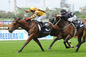 Steps In Time is chasing her third straight win in the Breeders Classic at Rosehill Gardens this weekend.