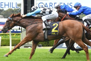 I Am Excited, above, wins the Spark Of Life Handicap at Rosehill. Photo by Steve Hart.