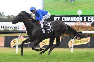 Glyn Schofield will ride Kementari, above, in the Missile Stakes at Randwick. Photo by Steve Hart.