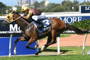 Tavago will head to the BMW following his impressive win in the Sky High Stakes. Photo by: Steve Hart