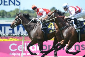 Target In Sight defeats Deep Field in the 2015 Maurice McCarten Stakes at Rosehill Gardens
