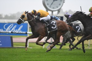 Star Of The Seas, above, relished the wet conditions to win the Maurice McCarten Stakes at Rosehill. Photo by Steve Hart.