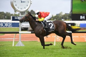Cosmic Force, above, is the new favourite for the Golden Slipper at Rosehill. Photo by Steve Hart.