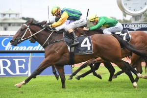 Easy Eddie, above, will head to The Galaxy after winning the Maurice McCarten Stakes at Rosehill. Photo by Steve Hart.