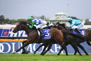 Fifty Stars,above, races into the Doncaster Mile with a win in the Ajax Stakes at Rosehill. Photo by Steve Hart.