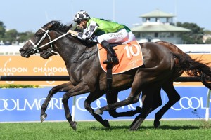 Unforgotten, above, bounces back to the winner's stall in the Phar Lap Stakes at Rosehill. Photo by Steve Hart.
