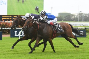 Big Duke Wins NE Manion Cup on Protest