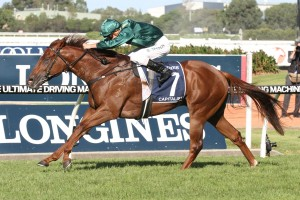 Capitalist will be extremely tough to beat in Saturday's San Domenico Stakes at Rosehill. Photo: Ultimate Racing Photos