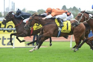 Rising Romance was beaten by Scratchy Bottom in the 2015 The BMW at Rosehill Gardens this weekend. Photo by: Steve Hart