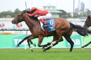 Volkstok'n'Barrell is primed for a big performance in Saturday's Group 1 Doomben Cup. Photo: Steve Hart