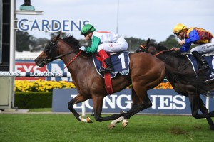 Castelvecchio, above, scores a classy win in the 2020 Rosehill Guineas at Rosehill. Photo by Steve Hart.
