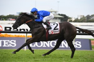 Avilius, above, is set to keep his unbeaten Sydney runs intact in the Tancred Stakes at Rosehill.