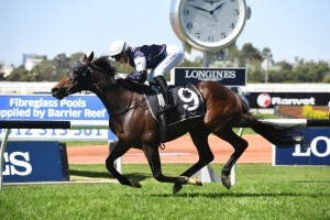 Midterm, above, will now head towards the 2019 Sydney Cup after a tough win in the N E Manion Cup at Rosehill. Photo by Steve Hart.