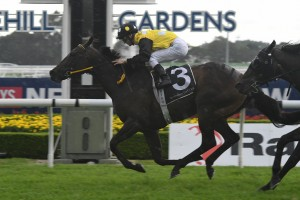 In Her Time, above, claimed her first Group 1 win in The Galaxy at Rosehill. Photo by Steve Hart.