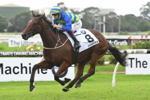 Jameka, above, hasn't raced since winning the 2017 The BMW at Rosehill. Photo by Steve Hart.