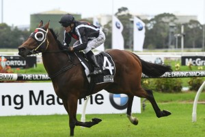 Jungle Edge lumped with 63.5kg in Pakenham Handicap