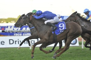 2017 Hawkesbury Gold Cup Tips & Odds Update