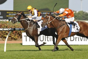 Preferment, gold cap, holds off stablemate Who Shot Thebarman to win The BMW at Rosehill. Photo by Steve Hart.