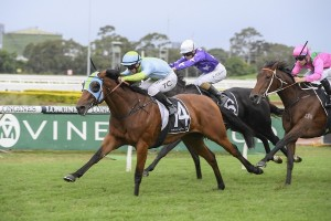 Positve Peace, above, made it five wins on the trot with her win in the Emancipaion Stakes at Rosehill. Photo by Steve Hart.