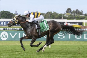 Quick Thinker, above, heads to the Australian Derby after winning the Tulloch Stakes at Rosehill. Photo by Steve Hart.