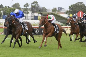 Vegadaze, above in white colours, out plugged his rivals to win the Star Kingdom Stakes at Rosehill. Photo by Steve Hart.