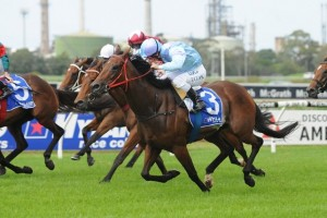 Avoid Lightning is outright favourite in betting markets for success in the 2014 Dark Jewel Classic