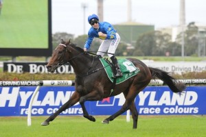 The Offer is eyeing a return to the winner's circle in the featured Group 1 Caulfield Cup. Photo: Steve Hart